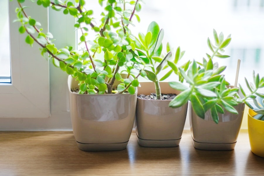 Houseplants for the Nature Lover