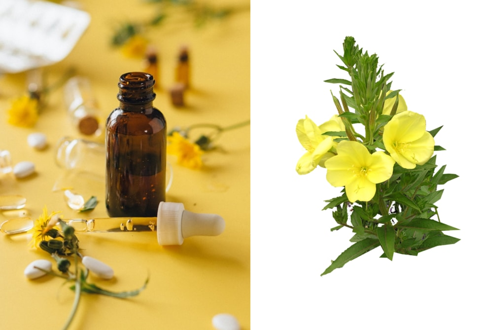 Evening primrose oil as one of the best non comedogenic oils